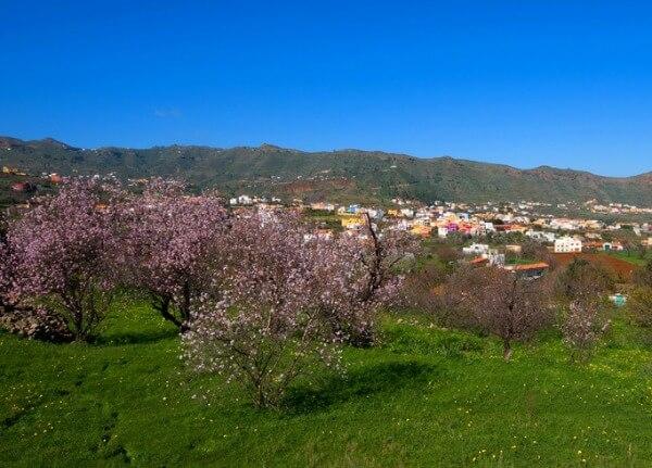 Valsequillo Almond Blossom, Gran Canaria