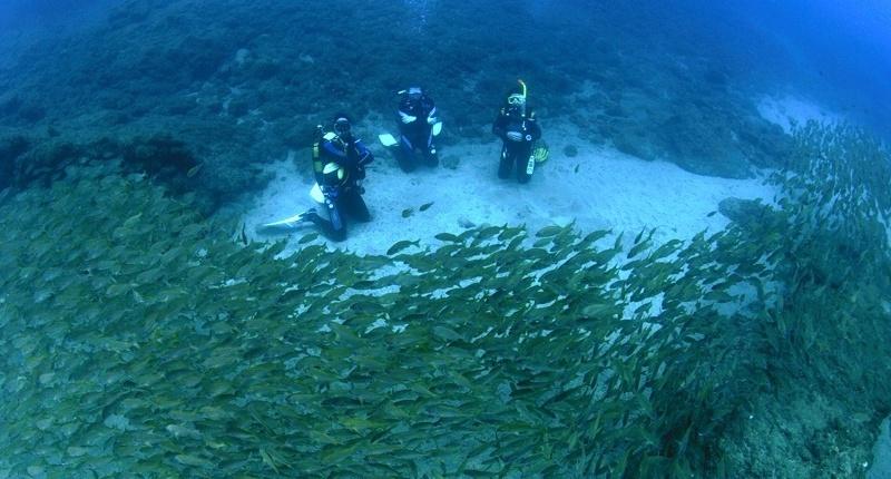 Diving Gran Canaria