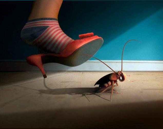 Gran Canaria Cockroaches