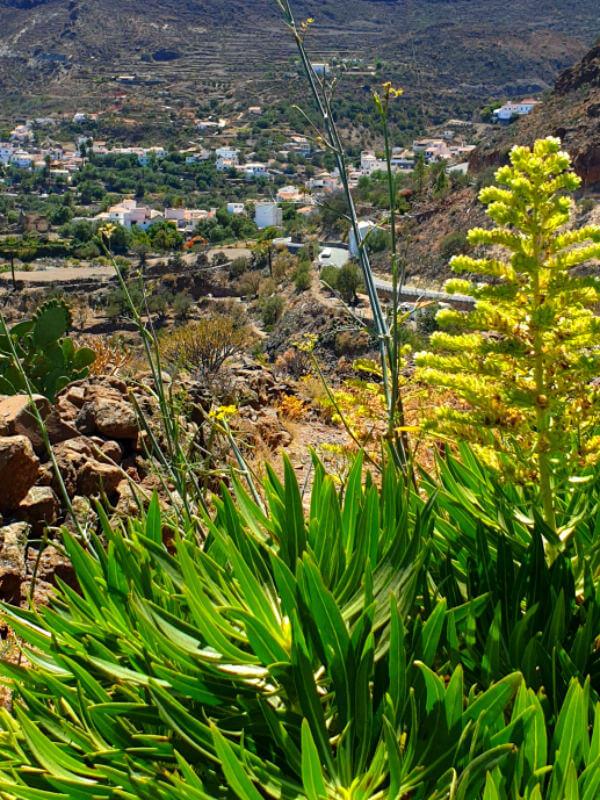TEMISAS cueva la audiencia cave Gran Canaria