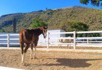 Horse Stables El Álamo Club Hípico Maspalomas Gran Canaria
