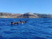 Dolphin Search Lineas Salmon Puerto Rico Gran Canaria