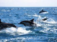 Gran Canaria Dolphin Search Lineas Salmon Puerto Rico