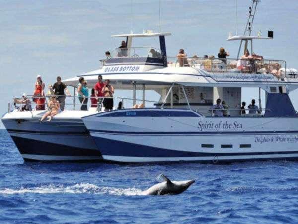 Spirit of the SEA Dolphin Trip Mogan