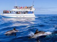 Spirit of the SEA Dolphin Trip Puerto Rico