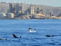 Spirit of the SEA Dolphin Trip Arguineguin