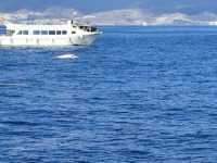 Dolphin Search Lineas Salmon Mogan