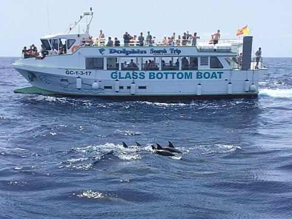 Delfiini-haku Lineas Salmon Mogan