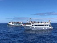 Dolphin Search Lineas Salmon Mogan