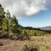Llanos de la Pez - Views to Roque Nublo