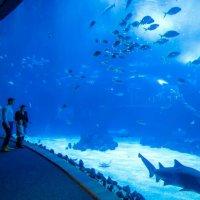 Poema del Mar Aquarium